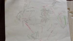 Map of Snowdance